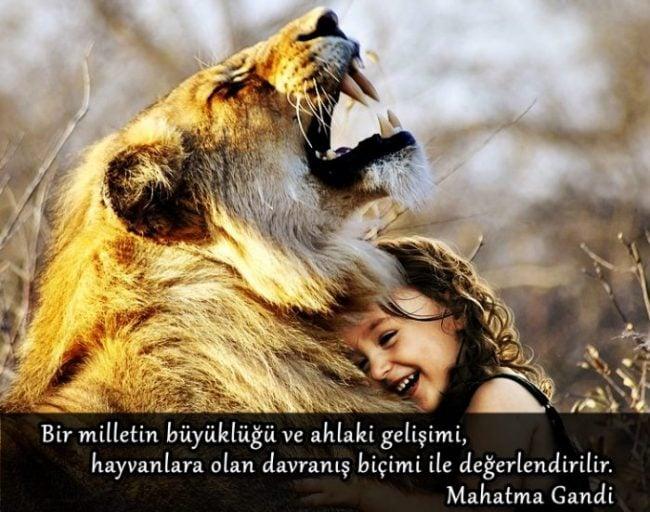 Hayvanlarla ilgili güzel sözler