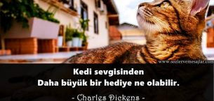 Kediler İle İlgili Sözler